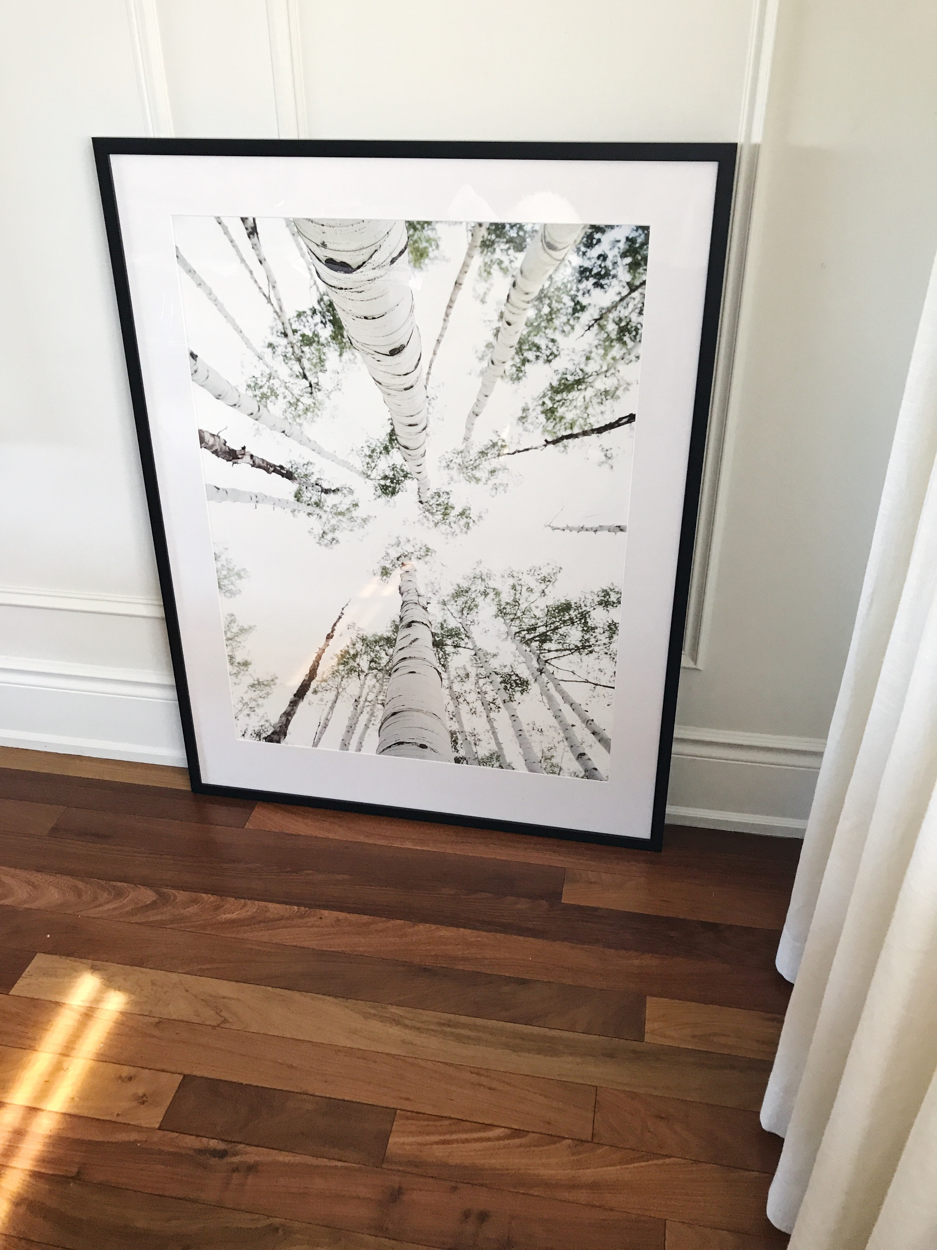Docere-Minted-Framed-And-Matted-Birch-Trees